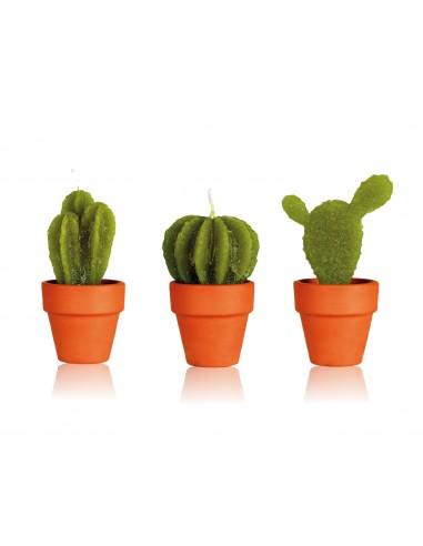 Set 3 piante grasse